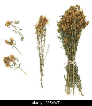 Iperico herb - Stock Photo