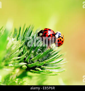 Nord, Lille, France, Europe - Stock Photo