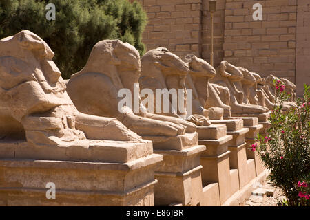 Egypt, Luxor, Karnak Temple, Avenue of Rams at temple entrance - Stock Photo