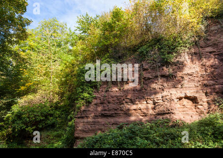 Triassic cliff face of mudstone, siltstone and sandstone at Colwick Cutting, a Site of Special Scientific Interest - Stock Photo