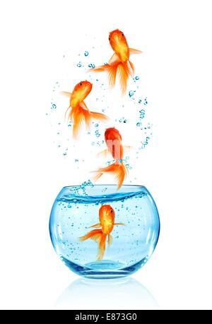 Goldfish jumping out of the aquarium isolated on white background. Search of freedom. - Stock Photo