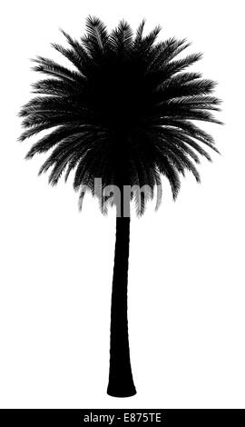 silhouette of canary island date palm tree isolated on white background - Stock Photo