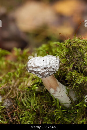 Beautiful autumn mushrooms - Stock Photo