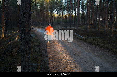 Isolated elderly senior woman Nordic walking ( pole walking ) in the taiga forest at dusk , Finland