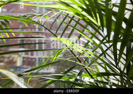 View through a dirty window pane, Lindener marketplace, Hanover, Lower Saxony, Germany, Europe - Stock Photo