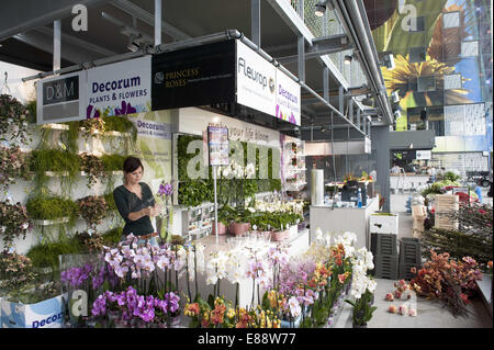 Sept. 30, 2014 - Rotterdam, South Holland, The Netherlands, Holland - An employee of a flower shop makes a bouquet - Stock Photo