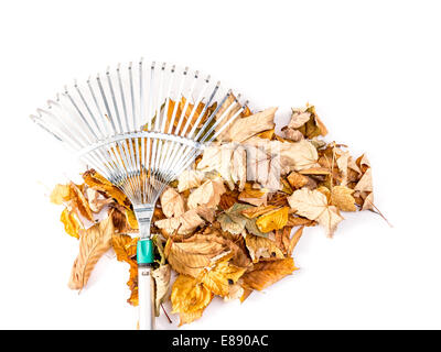 Pile of dead fall leaves swept by metal fan rake shot on white - Stock Photo