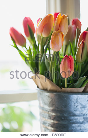 Close up of multicolor tulips in galvanized vase - Stock Photo