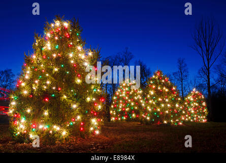 outdoor christmas trees have been decorated with red green and white lights and shot against - White Outdoor Christmas Tree