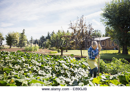 Woman working in sunny vegetable garden - Stock Photo