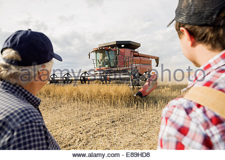 Farmers watching combine harvester in wheat field - Stock Photo