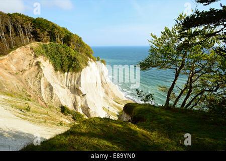 The chalk cliffs of Møns Klint, Møn or Moen Island, Denmark Stock Photo