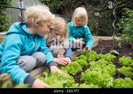 small blonde kids inspecting vegetable garden stock photo three blonde kids inspecting vegetable garden stock