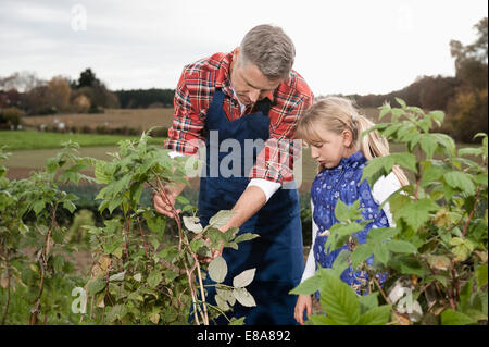 Farmer explaining daughter plant on field - Stock Photo