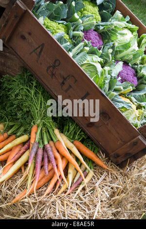 Malvern Autumn RHS show 2014 rainbow cauliflower and carrots - Stock Photo