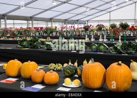 Malvern Autumn RHS show 2014 display of prize winning vegetables pumplins, cabbages and dahlias - Stock Photo
