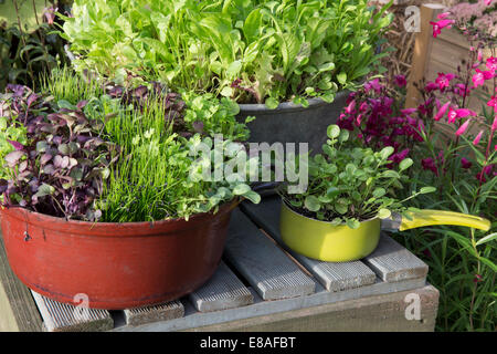 Malvern Autumn RHS show 2014 various salad crops growing in unusual containers land cress grown in saucepan and - Stock Photo