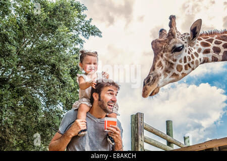 Giggling baby girl on fathers shoulders feeding giraffe at zoo - Stock Photo