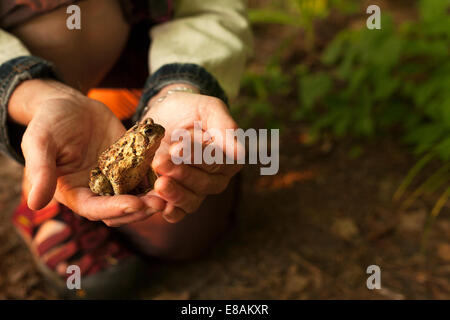 Close up of hands holding a toad - Stock Photo