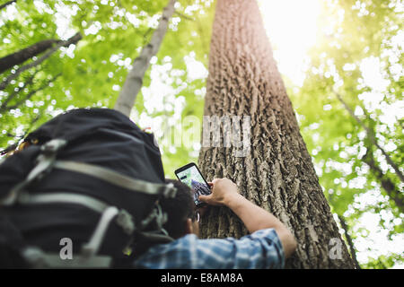 Man taking photo of tree trunk with camera phone, low angle