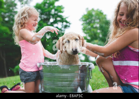 Labrador Retriever puppy in bucket shaking bath water at sisters - Stock Photo