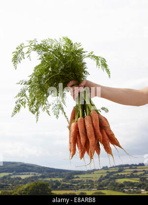 Hand holding up bunch of carrots - Stock Photo