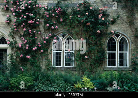 ... Pink Climbing Roses On Stone Country House With Gothic Style Windows    Stock Photo