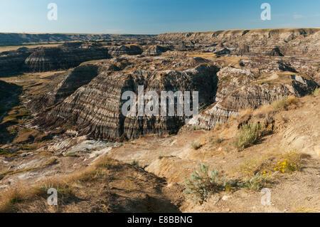 Elk203-6617 Canada, Alberta, Drumheller, Alberta Badlands - Stock Photo