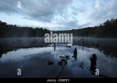 Beaver pond with mist rising from the water - Stock Photo