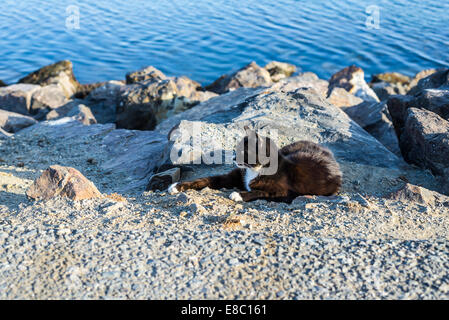 Black and white feral cat lying along the Mission Bay Channel Jetty. San Diego, California, United States. - Stock Photo