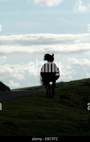 Wild pony on Dartmoor, silhouette of a horse running over a hill at twilight - Stock Photo