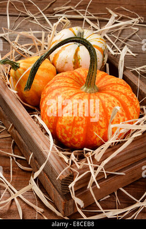 Closeup of decorative pumpkins and gourds in wooden crate with straw. Vertical format on a rustic wood table. - Stock Photo