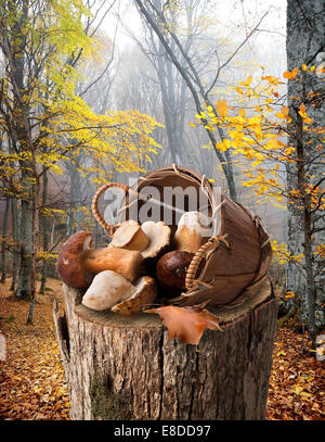 Mushrooms in a basket on stump in autumn forest - Stock Photo
