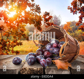 Plums in a basket on wooden table and autumn landscape - Stock Photo