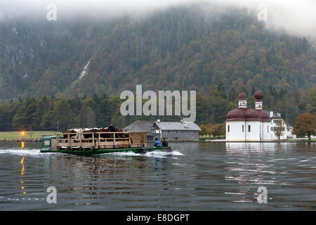 Tied together, two boats loaded with cattle are pictured on the Bavarian Koenigsee, Germany, 06 October 2014. Almabtrieb - Stock Photo