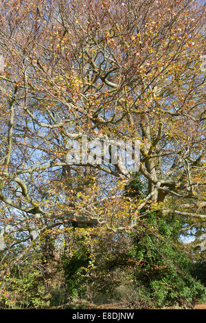 Autumn trees in the woods - Stock Photo