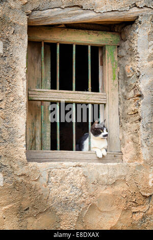 Image of a cat sitting on window in a village on Saiq Plateau in Oman - Stock Photo
