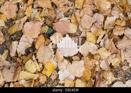Crunchy Autumn leaves. - Stock Photo