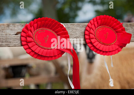 First prize rosette Ryedale Show near Kirkbymoorside North Yorkshire England UK United Kingdom GB Great Britain - Stock Photo