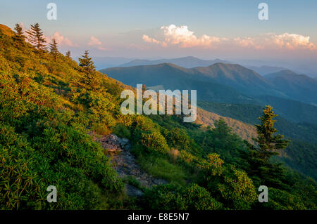 Late afternoon on Roan Mountain in North Carolina. Roan Mountain is the highest point in the Roan-Unaka Range at - Stock Photo