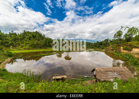 Stunning landscape and bright rice fields in Tana Toraja, South Sulawesi, Indonesia. Wide angle view. - Stock Photo