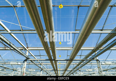 greenhouse interior with heating pipes
