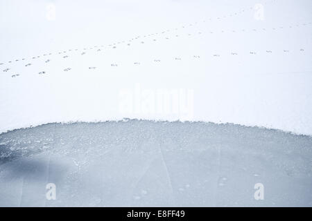 Animal tracks on frozen snow-covered lake, Colorado, America, USA - Stock Photo