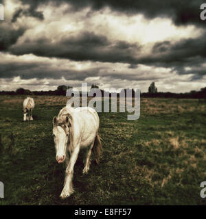 Two Horses in field with moody sky - Stock Photo