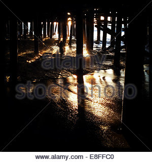 USA, California, Santa Monica, In Woods, Under Santa Monica Pier - Stock Photo