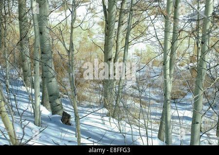 Snowy woodland - Stock Photo
