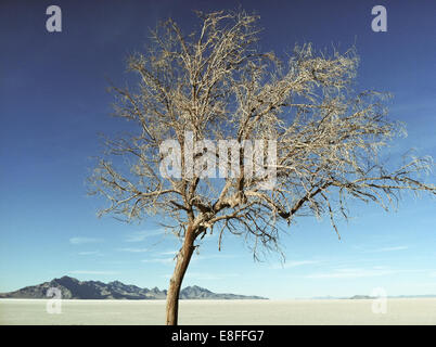 USA, Utah, Tooele, Great Salt Lake Desert, Bonneville Salt Flats State Park, Tree in desert - Stock Photo