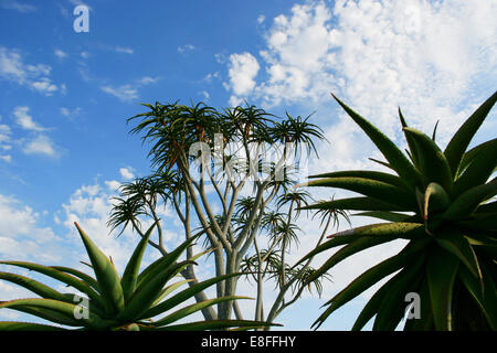Low angle view of plants against cloudy sky - Stock Photo