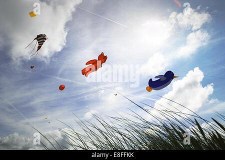 Low angle view of kites flying at kite festival, Fanoe, Denmark - Stock Photo