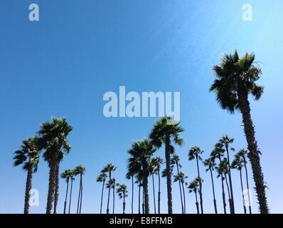 Low angle view of palm trees, California, America, USA - Stock Photo